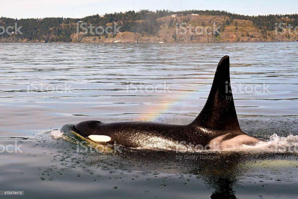 Onyx Rainbow stock photo