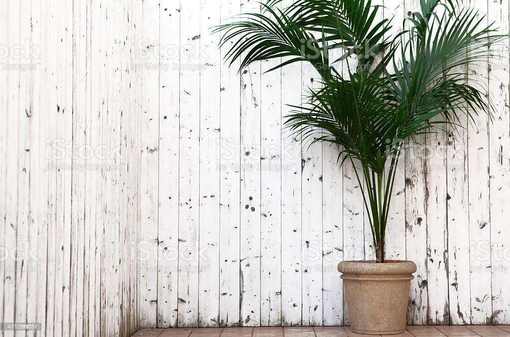 Aprire un balcone con kentia - Foto stock royalty-free di Arredamento