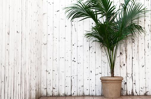 Aprire Un Balcone Con Kentia - Fotografie stock e altre immagini di Arredamento