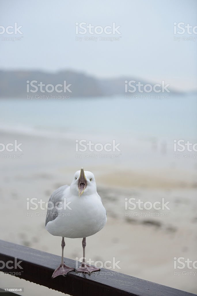 Open beak. royalty-free stock photo