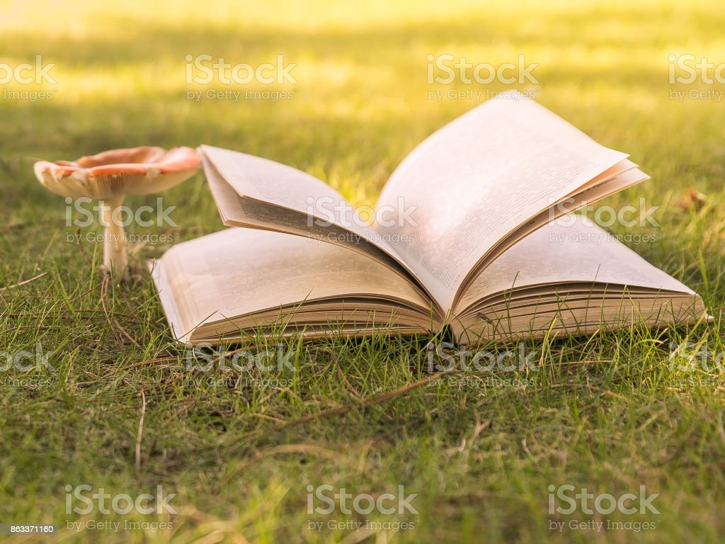 Open book and mushroom amanita in sunlight on the grass. stock photo
