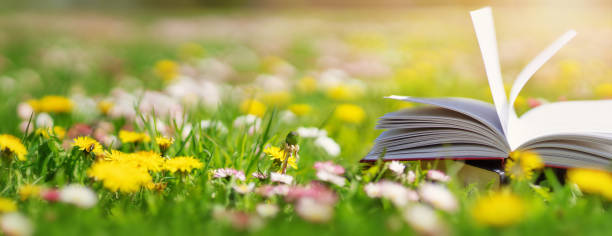 Open book in the grass on the field on sunny day stock photo
