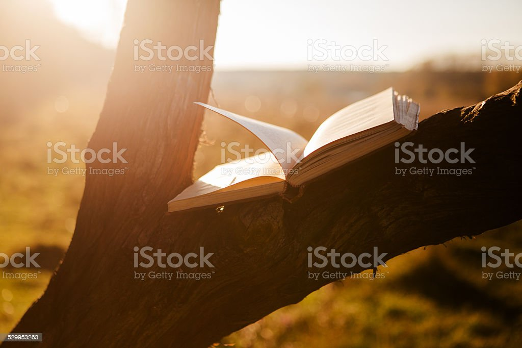 Open book on tree stock photo