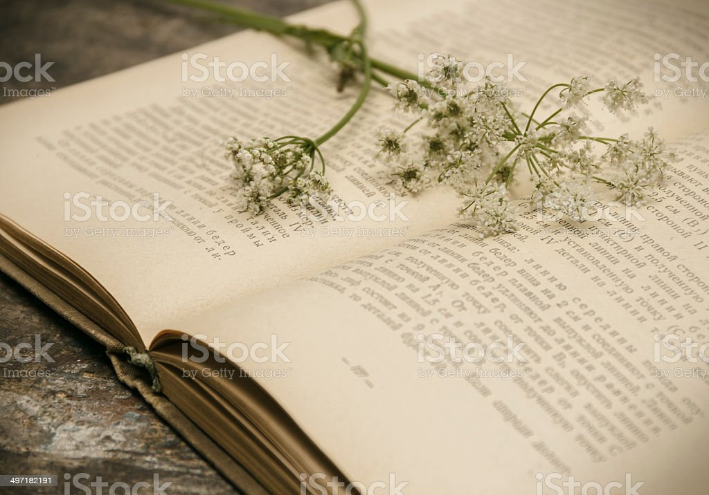 Open book on wood desk with field flowers stock photo