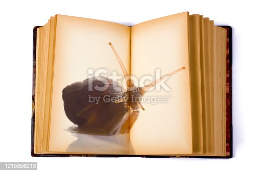 Open Book with a Snail