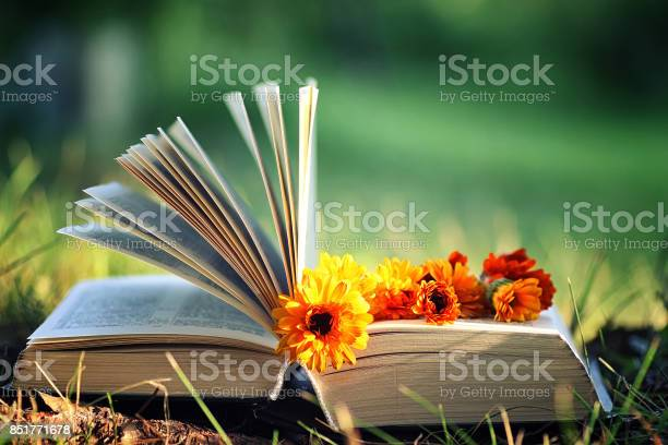 Photo of open book with flower on grass