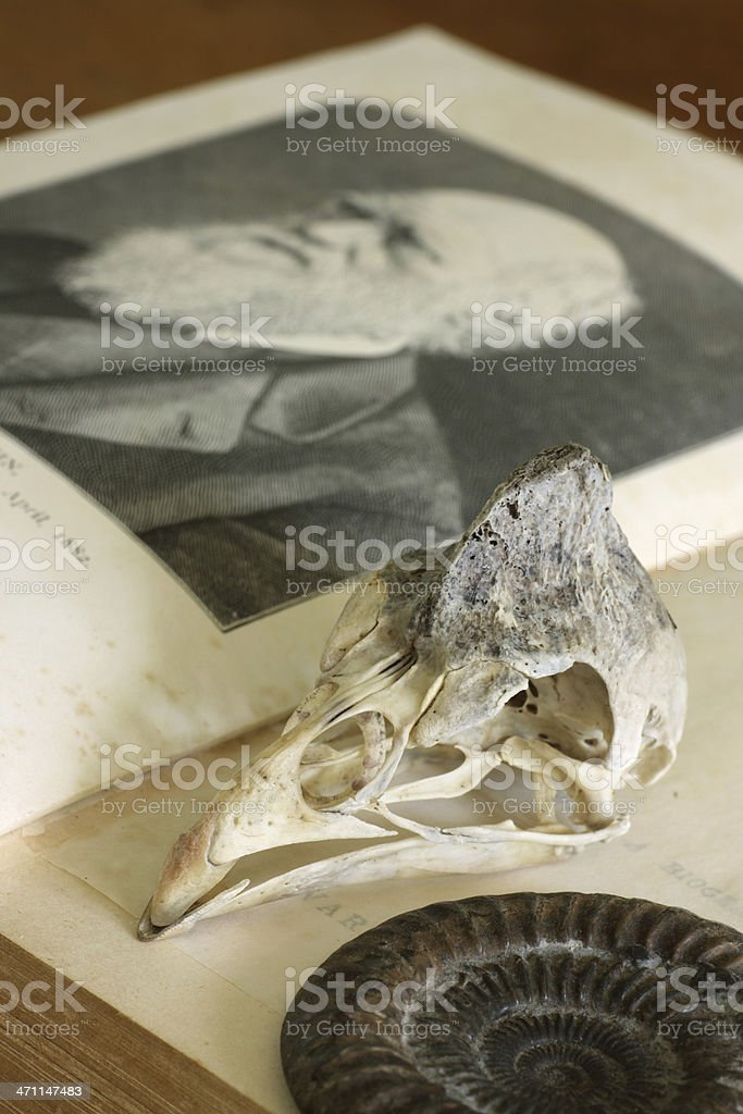Open Charles Darwin book with guinea-fowl skull and ammonite stock photo
