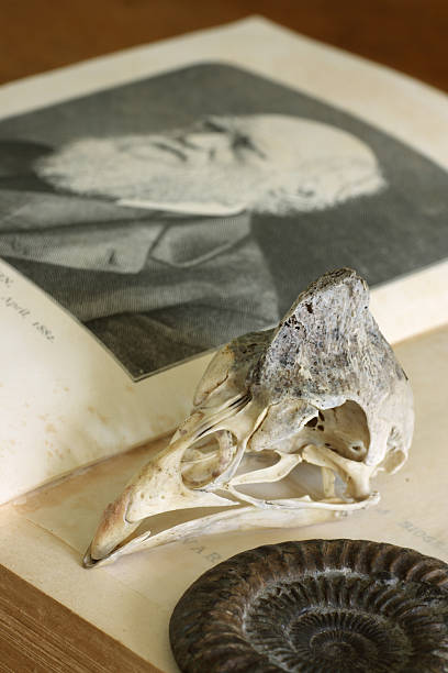 open charles darwin book with guinea-fowl skull and ammonite - darwin stock photos and pictures