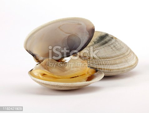 open clam on white background