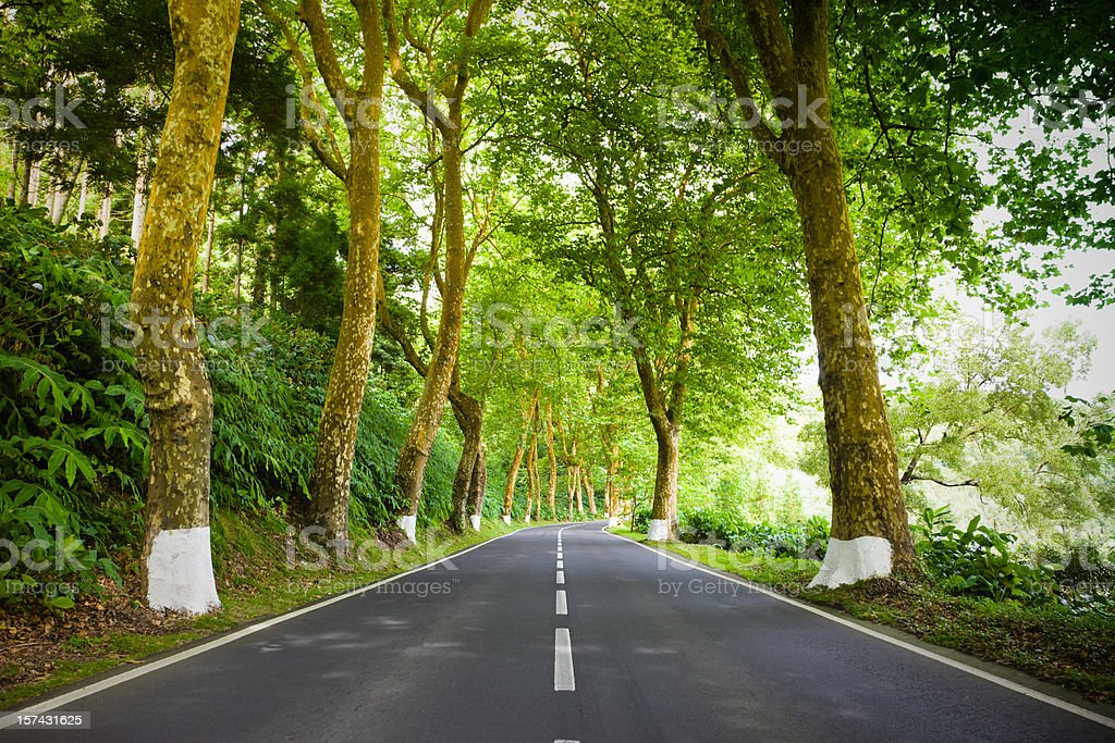Open Country Forest Road royalty-free stock photo
