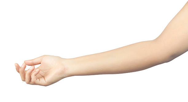 open female hand to hold something - human arm stock pictures, royalty-free photos & images