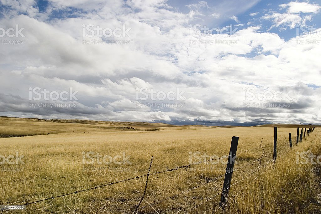 Open Field royalty-free stock photo