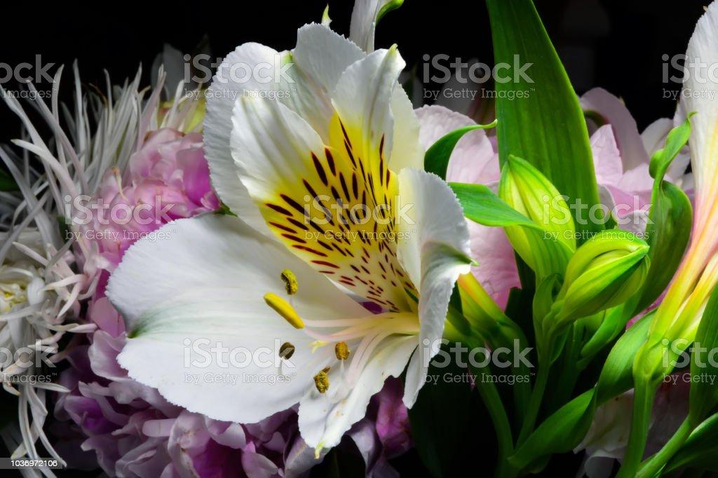 open flower of white alstroemeria in bouquet.