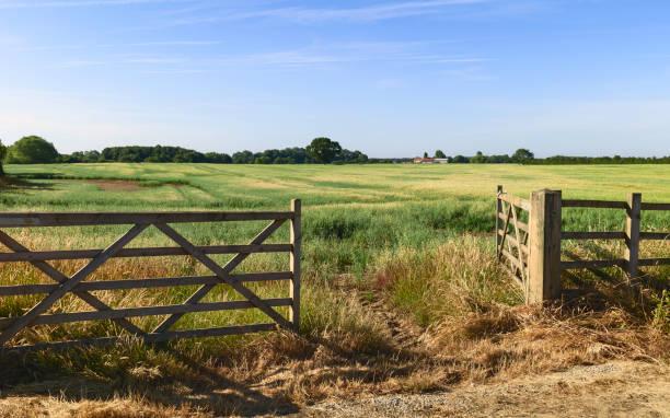 open gate into agricultural landscape in summer, beverley, yorkshire, uk. - portão imagens e fotografias de stock