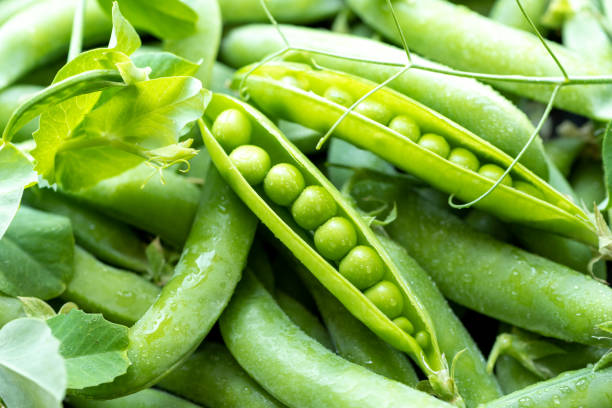 open green pea pods - ervilha imagens e fotografias de stock