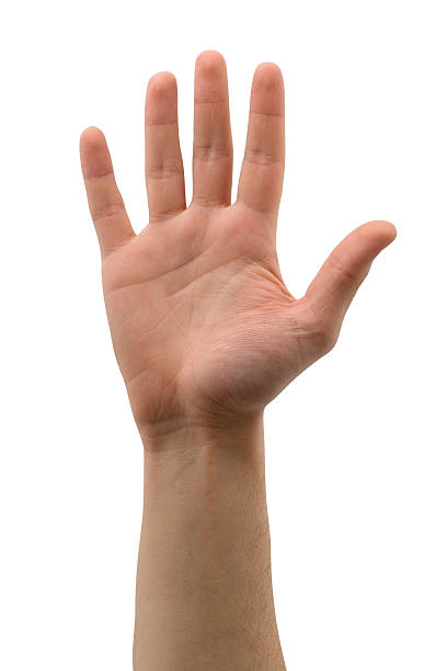 mano aperta (isolato - sventolare la mano foto e immagini stock