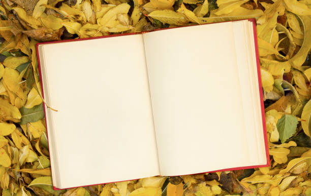 open notebook on autumn leaves. - folha de caderno imagens e fotografias de stock
