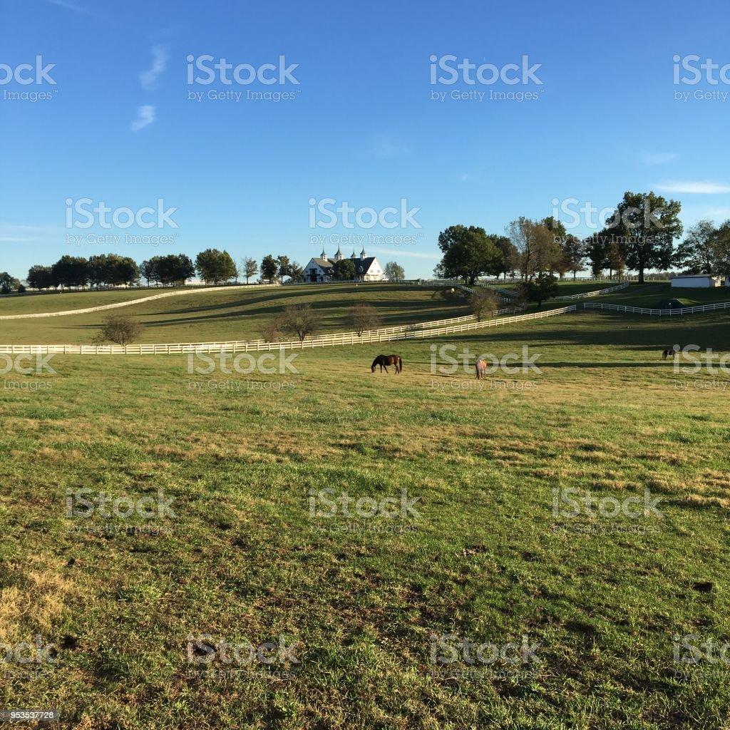 Open pasture stock photo