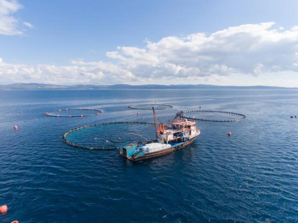 open sea fish farm - aquacultura imagens e fotografias de stock