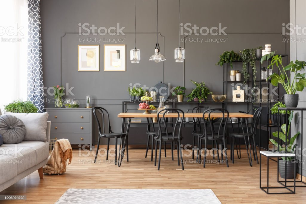 Open space apartment interior with black chairs at a wooden table in the dining area and metal racks with plants against dark wall with molding. Real photo stock photo