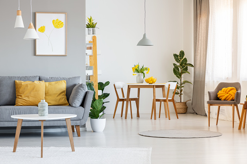 Open space living and dining room interior with gray sofa, wooden tables, white chairs and plants. Real photo