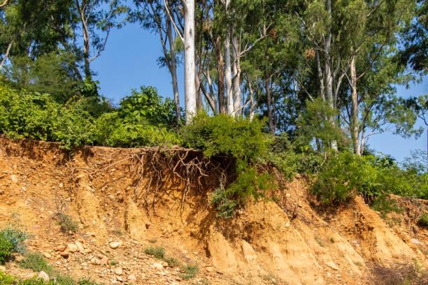 otwarte korzenie drzew z powodu osuwisk, erozji gleby, po cięciu drogi - erodowany zdjęcia i obrazy z banku zdjęć