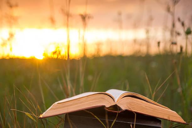 Abierto y de tapa dura fanned libro con páginas de naturaleza borrosa fondo - foto de stock
