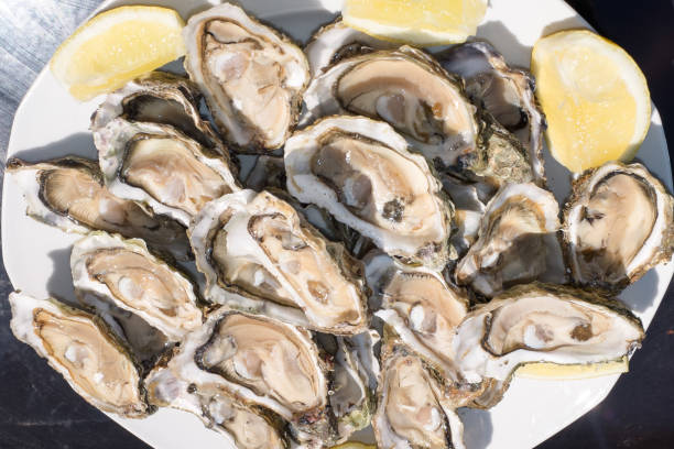 Top 60 Oysters On The Half Shell Stock Photos, Pictures ...