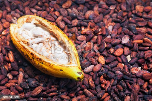 istock Opened ripe cocoa pod on drying raw beans background 886701386