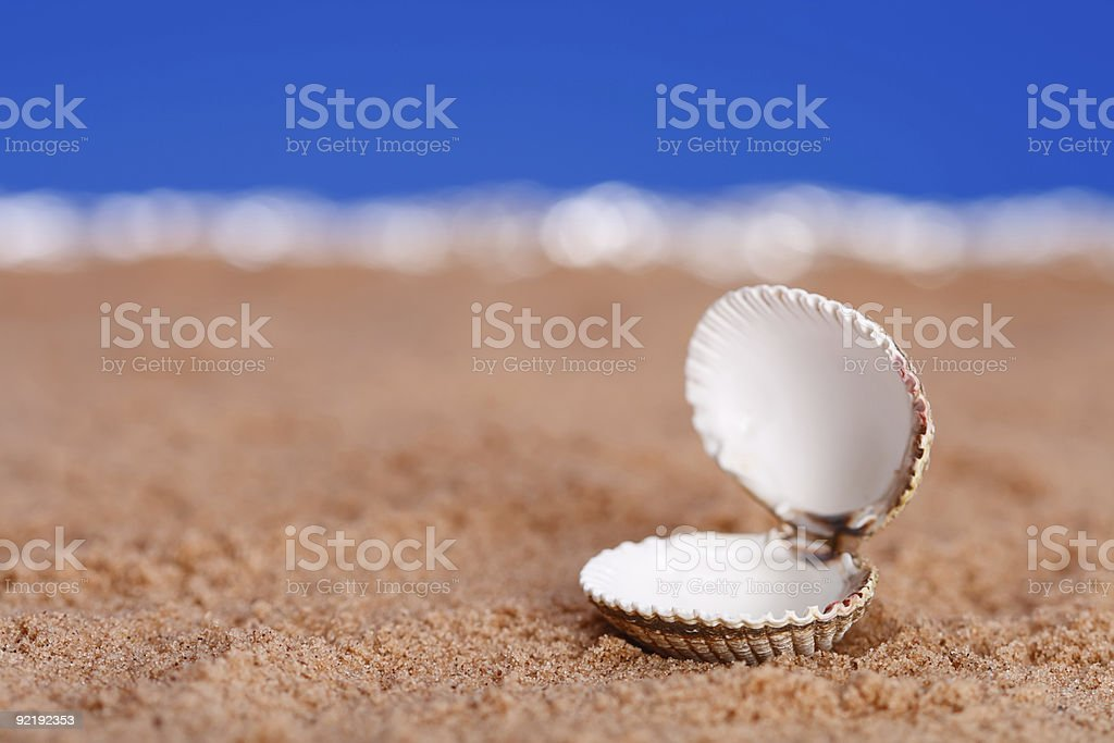 opened sea shell on beach sand and blue sky background stock photo