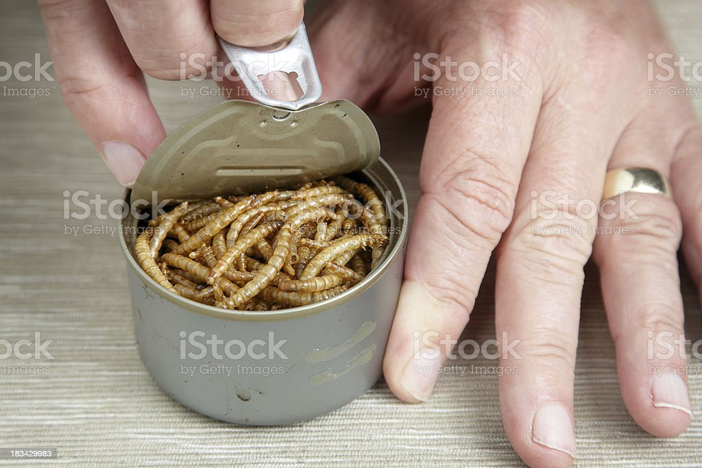 Opening a can of worms royalty-free stock photo