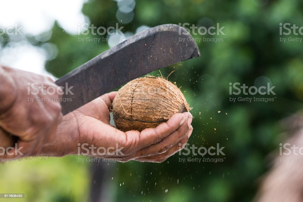 Opening fresh coconut stock photo