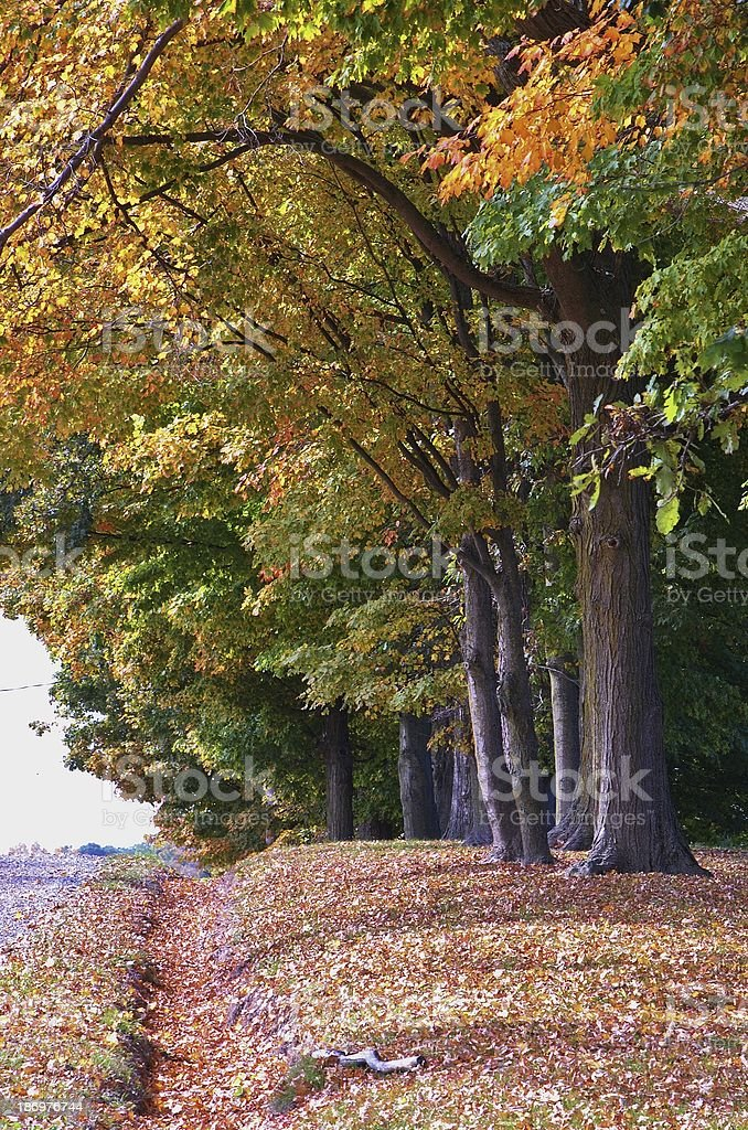 Opulent October royalty-free stock photo