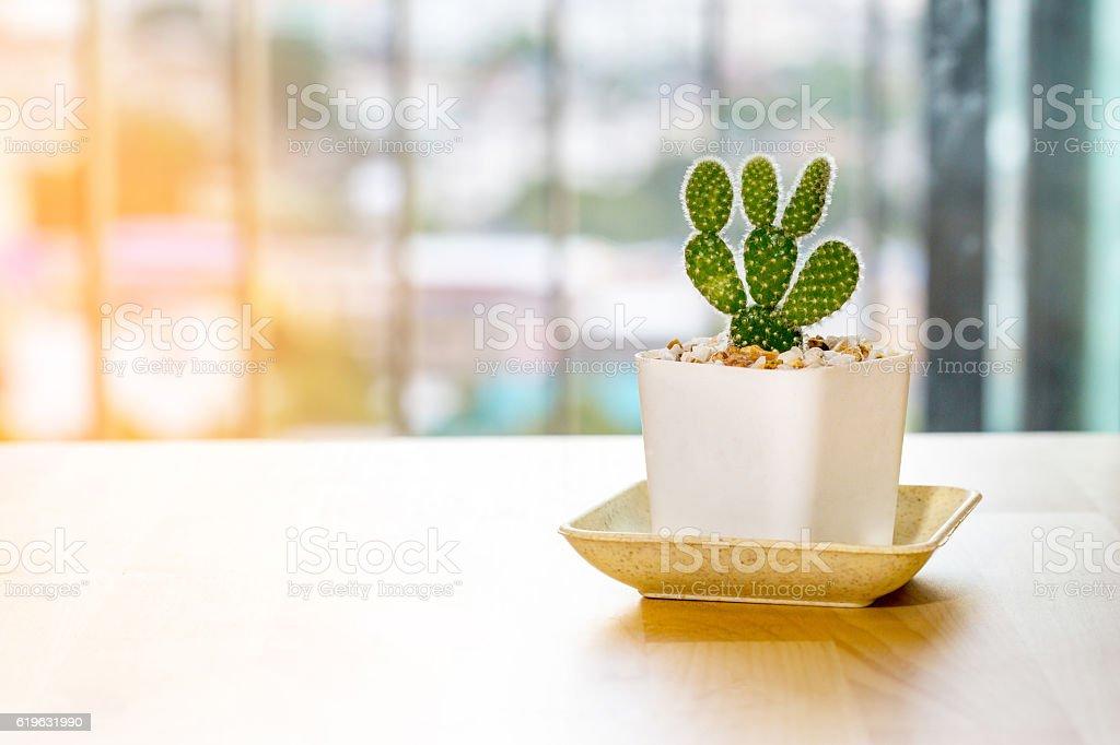 Opuntia cactus stock photo