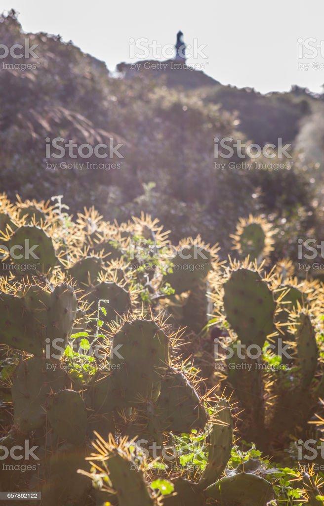 Opuntia stricta cactus backlight with El Rompido lighthouse at bottom, Huelva, Spain stock photo