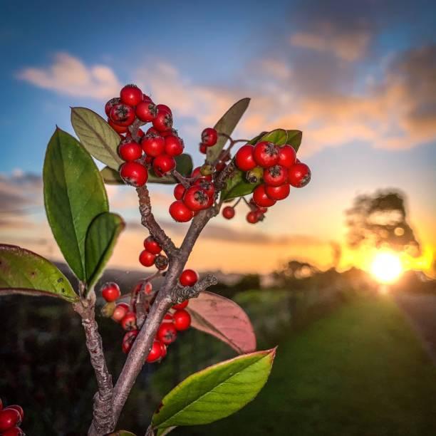 Orakei Sunset stock photo
