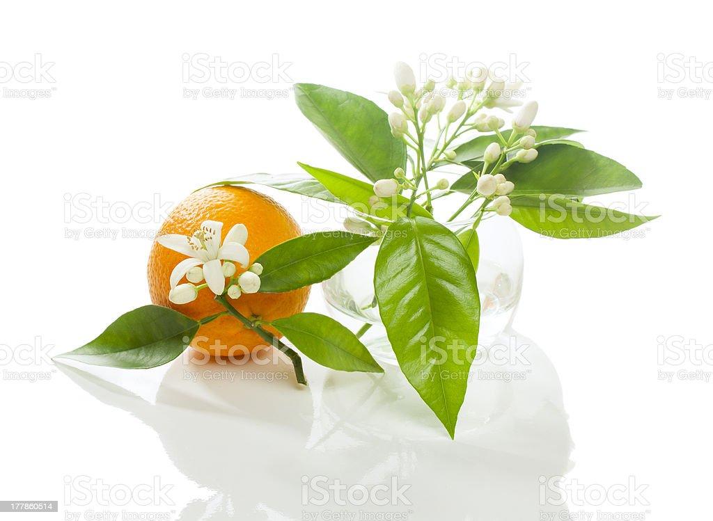 Orange  and blossom stock photo