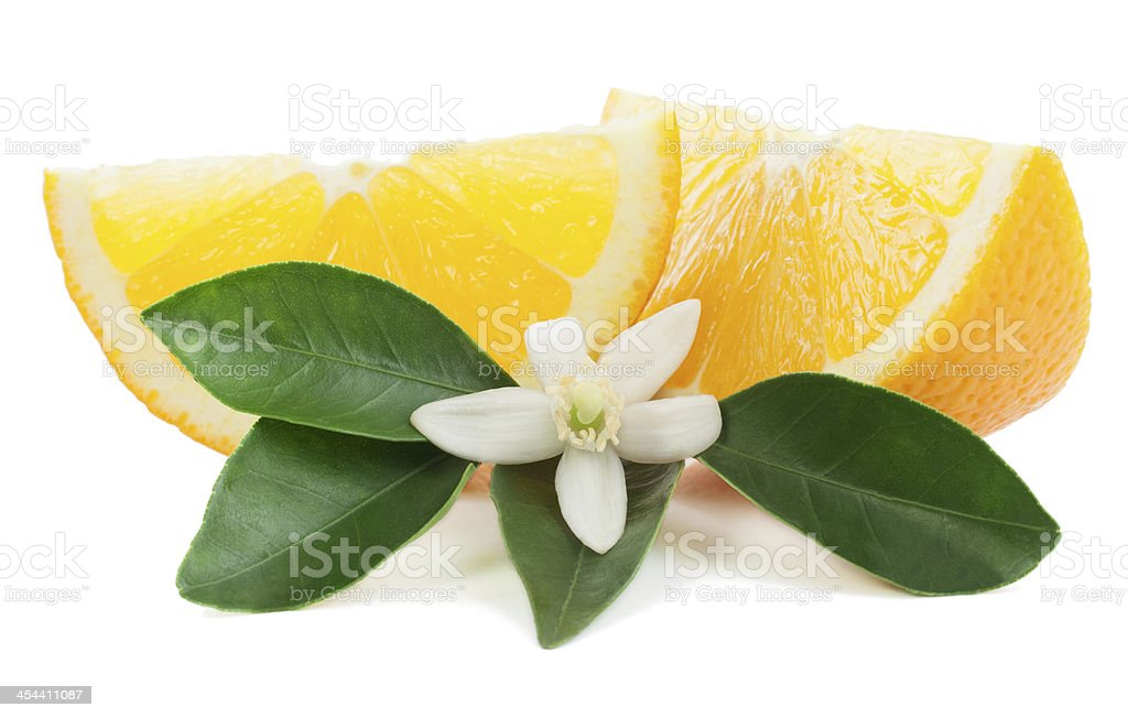 Orange and blossom stock photo