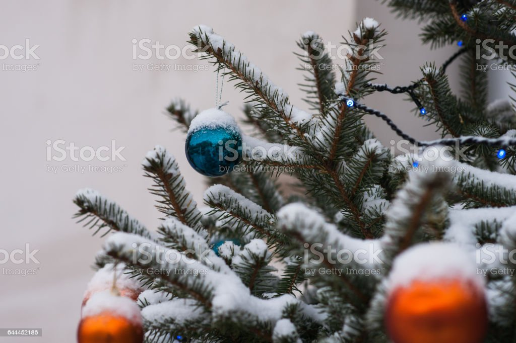 orange and blue decoration balls on a snow covered spruce tree royalty free stock photo
