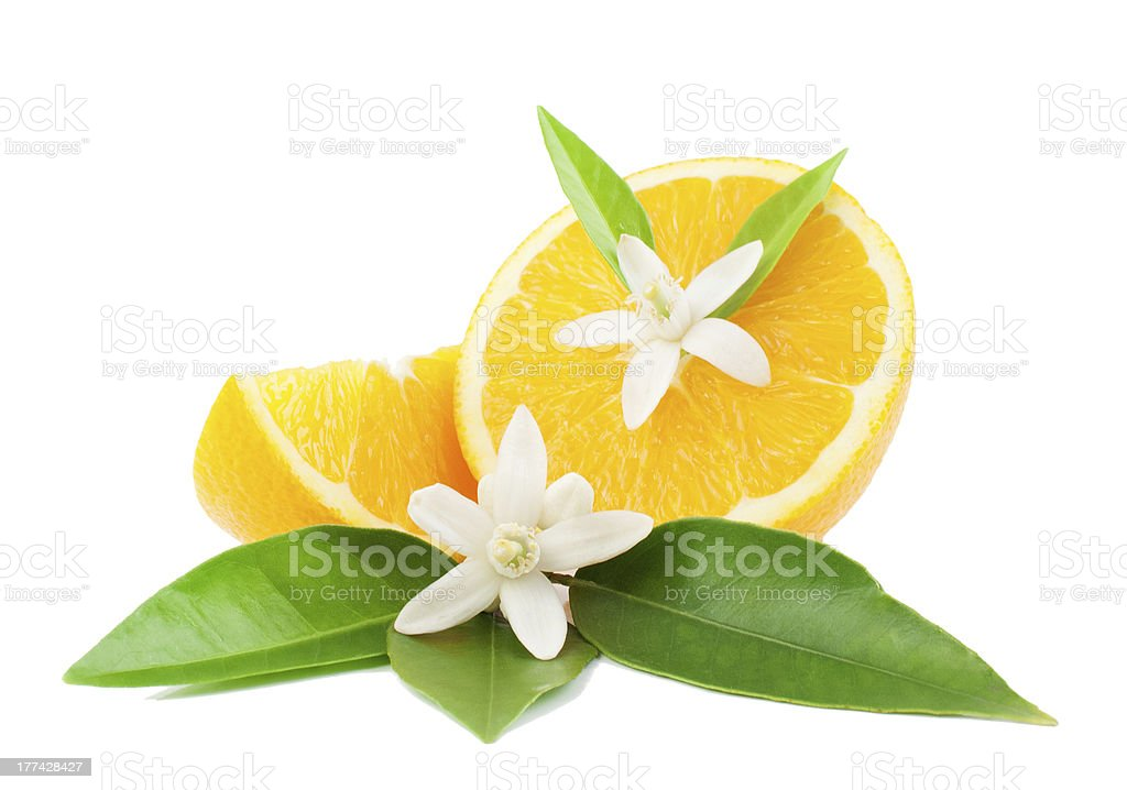 Orange and flower stock photo
