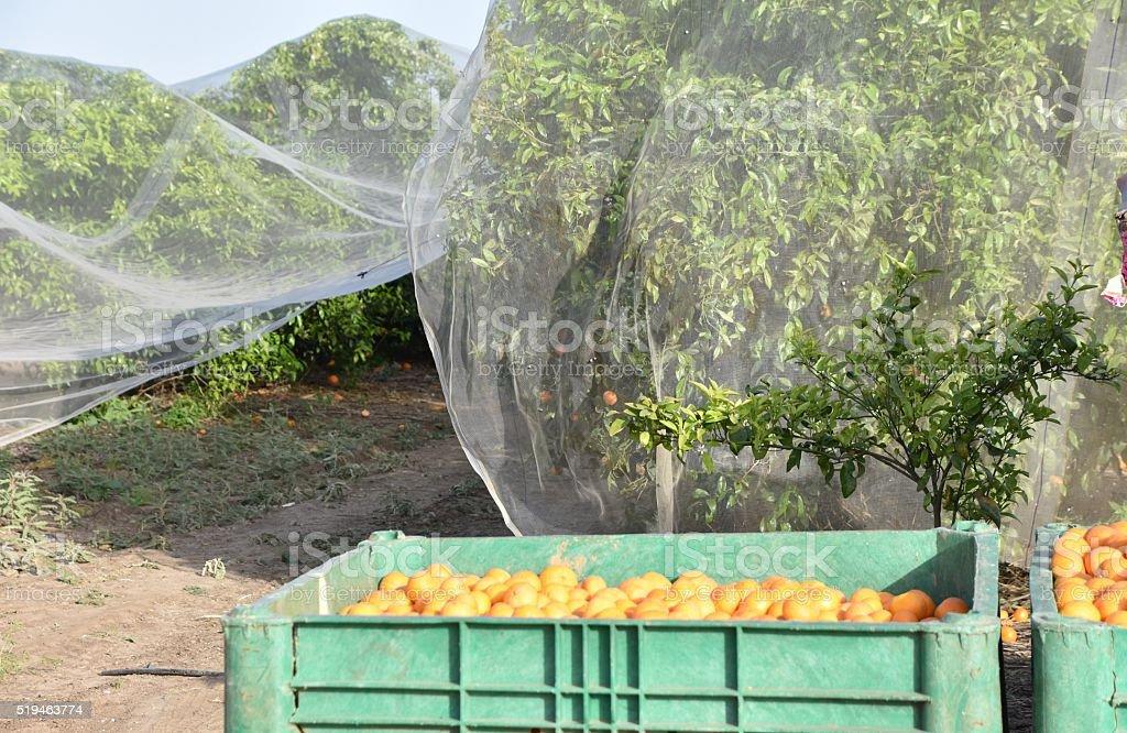 orange and tree stock photo