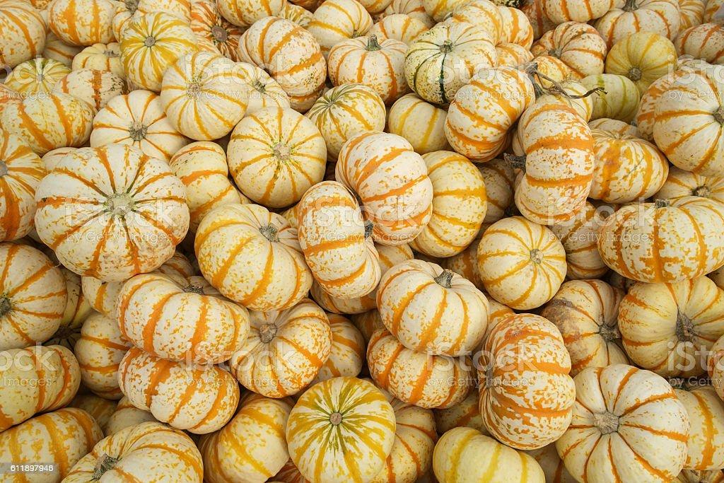 Orange and white gourds stock photo