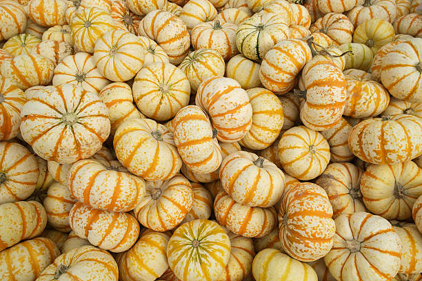 Orange and white gourds stock photo