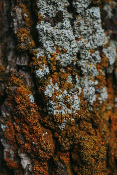 Orange and White Moss on Tree Bark stock photo