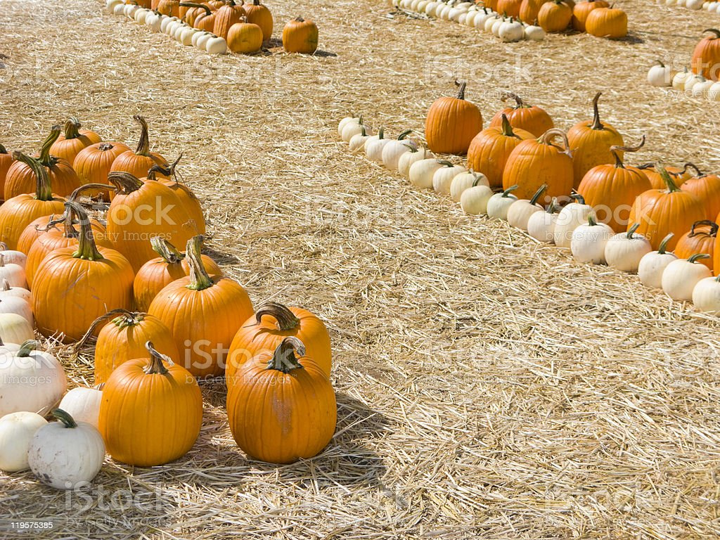 Orange And White Pumpkins Stock Photo Download Image Now