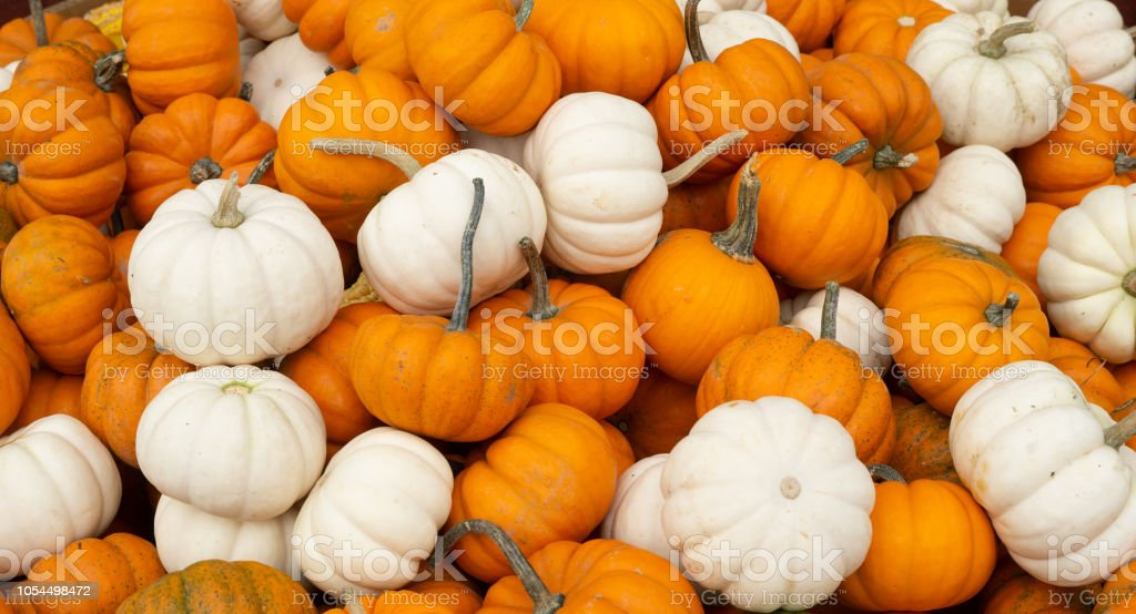 Orange and white pumpkins at farmers market in Lancaster County,...