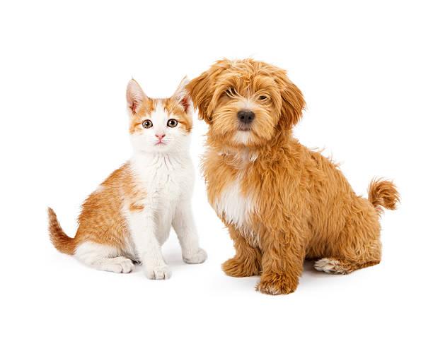 оранжевый и белый щенок и каблуке «рюмочка» - котик яркий стоковые фото и изображения