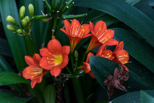 orange and yellow flowers - stamen stock photos and pictures