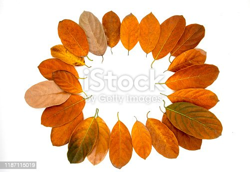 Orange autumn leaf on white background. Seasonal frame top view photo. Fall season flat lay with orange leaves and place for text. Autumn banner template. Yellow red foliage frame. Fall leaves wreath