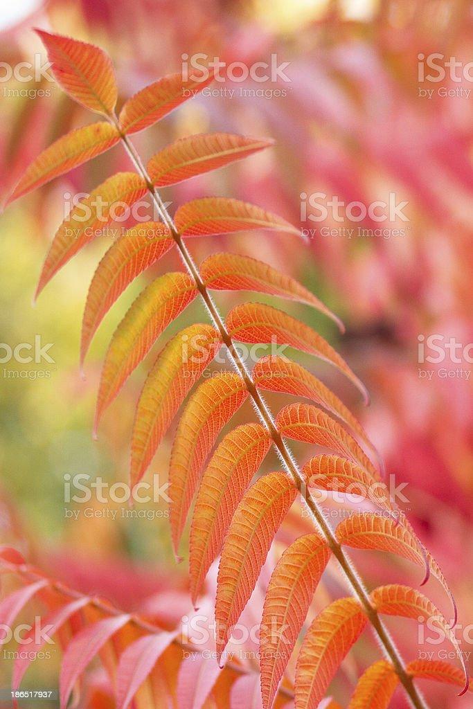 Orange autumn royalty-free stock photo